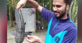 অ্যাকুরিয়ামের মাছ ধরা পড়লো পুকুরে