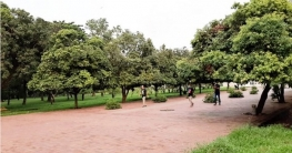 বুক ভরে শ্বাস নিতে সোহরাওয়ার্দী উদ্যানে ছুটে আসছে নগরবাসী
