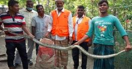 সুন্দরবনের অজগর মোংলার লোকালয়ে